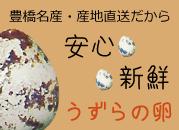 産地直送 豊橋産 うずらの卵